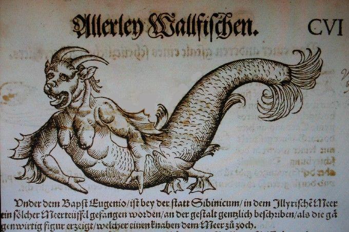 konrad-gesner-meeresteufel-sibenik-etnografisches_museum_021s