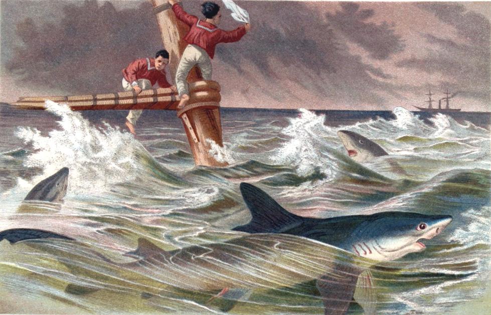 Meeresungeheuer und Hai-Attacken an der Adria - Blauhai