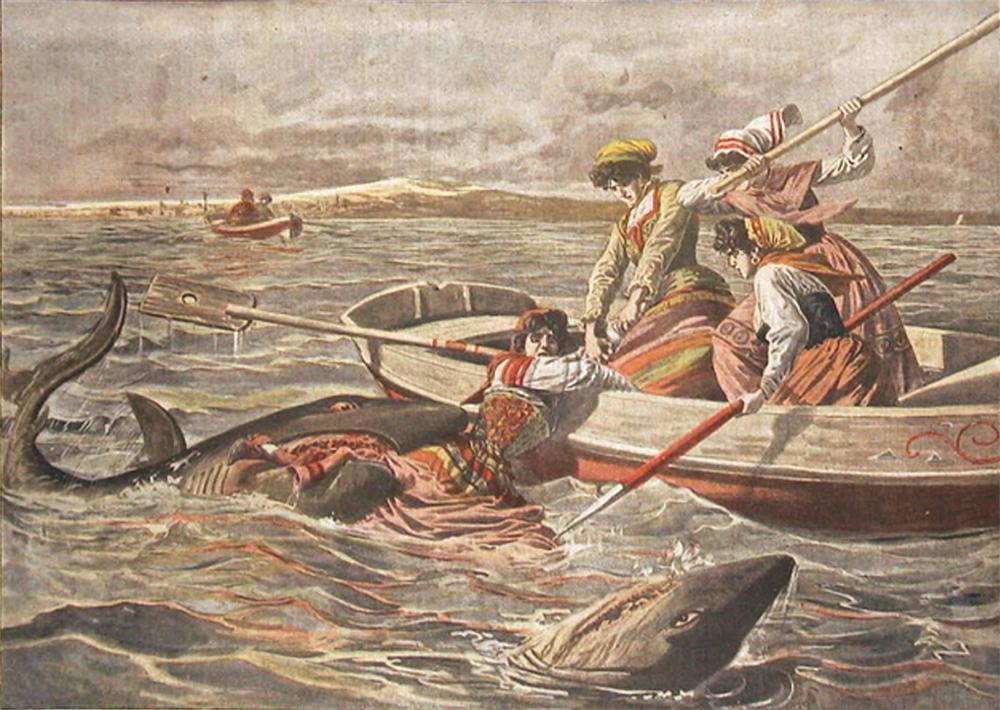Meeresungeheuer und Hai-Attacken an der Adria in historischen Berichten